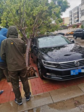 【阳光快讯】大雨过后,那些最可爱的背影,为我们排忧解困——阳光财险沧州中支理赔服务部查勘人员雨天救援被砸车辆270.png
