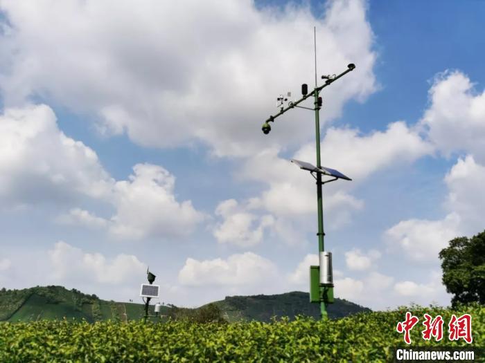 白茶茶园农业气象观测系统 航天科工供图 摄